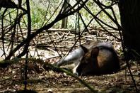 Les Dombes....la vie comme en Australie...