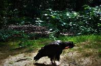 Le monde des vautours....