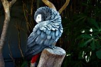 Des merveilles exotiques...perroquets....