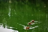 L'été dans l'Ain ....les Dombes....
