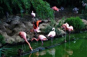 Parc des oiseaux dans Villars les Dombes...
