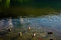 Au Lac de Nantua....