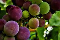 Fruits de la ville....