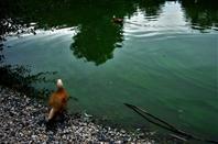 Au bord de l'eau....