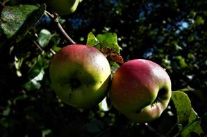 Fruits d'été....