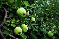 Fruits de la ville....................