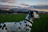 Au coucher du Soleil....la piste................