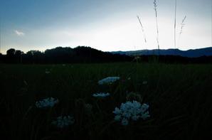 Au bord de la piste....la belle vue...