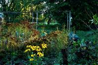 Jardin et les belles lanternes japonaises....