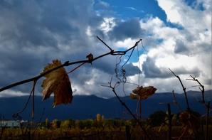 Jura....vigne et la Bagasse....