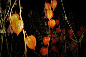 Lanternes japonaises en liberté...
