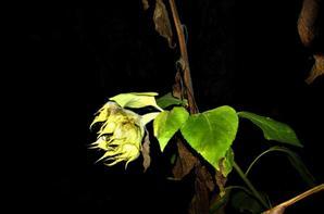 Jardin en nocturne.....