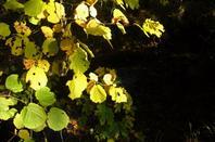 Couleurs d'automne....les bois...