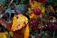 Magie d'automne....