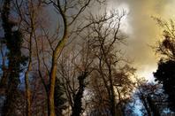A la tombé de nuit ....la nature  d'automne...