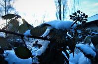 La neige est la....et bien la....