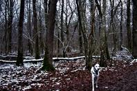 Dans les bois.................