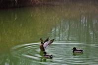 Au bord de l'étang............