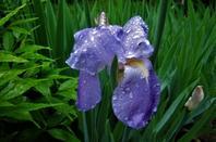 Mai....et ses belles fleurs...