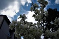 Mai....la ville est en fleurs ...........
