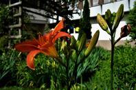 Les fleurs de la ville.....