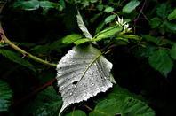 En peu de pluie....