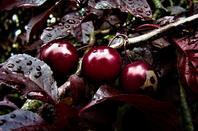 Des fruits et des fleurs...