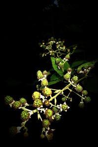 Nature d'été....en nocturne...