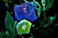 La nuit est....bleu....