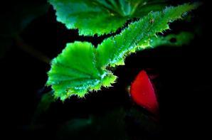 Nuit dans le jardin.....