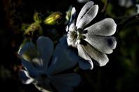 Fleurs de champ.....