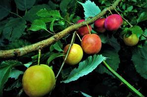 Fruits des bois.....