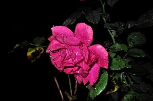 En nocturne....la nature est belle...