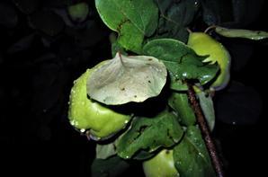 Une nuit pluvieuse et...verte...