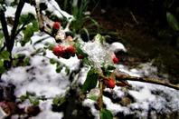 2 jours de neige....début d'avril...