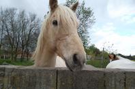 quelques poneys(2)