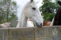 quelques poneys(1)