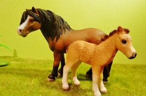 Famille Dartmoor