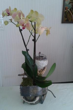 L' Orchidée de Maman