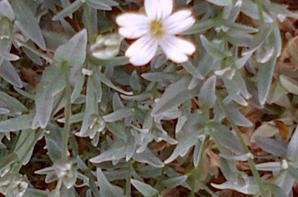 Encore quelques fleurs de printemps