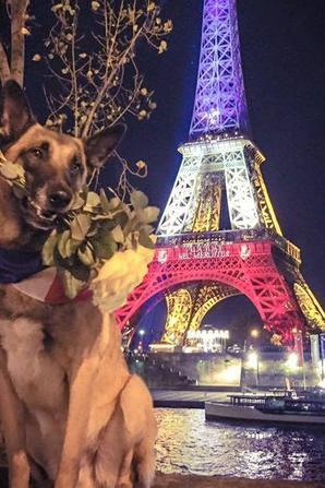 repose en paix tu mérite des hommages de la France