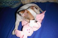 ma petite choupette mon chien