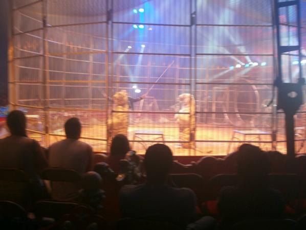 cirque AMAR à COUTANCES  le 27 aout 2016
