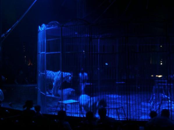 Cirque MEDRANO ( les tigres )