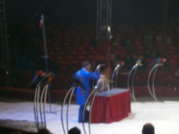 cirque MEDRANO ( les péroquets)