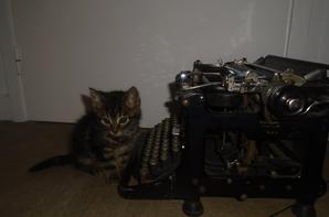 Photos de chatons et UNE GRANDE NOUVELLE