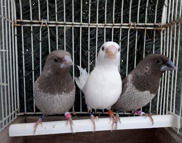 3 nouveaux mâles
