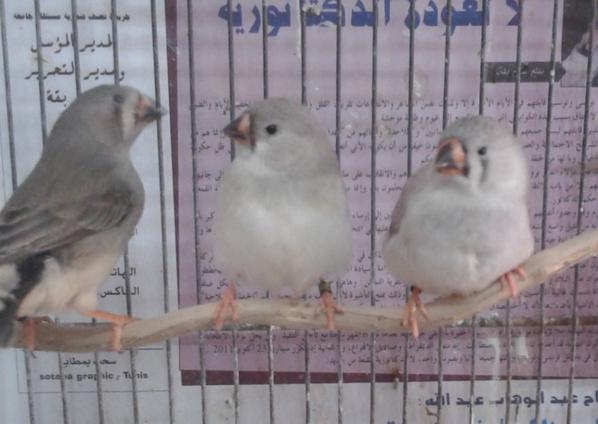 les trois mousquetaires :)