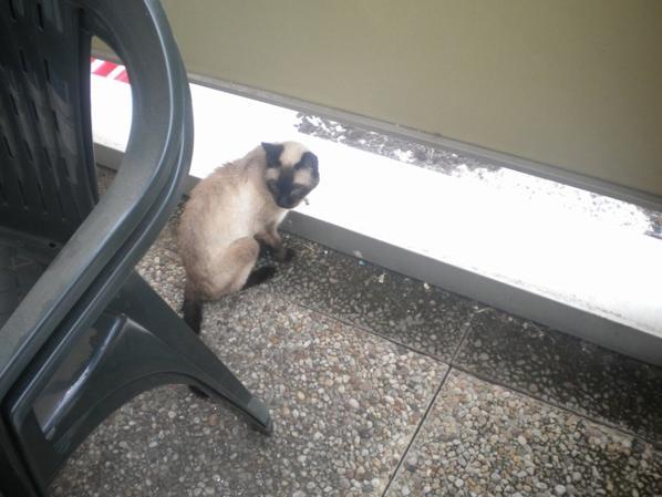 Ma petite Minette Fripounette tres heureuse d'avoir déménagée elle adore le balcon