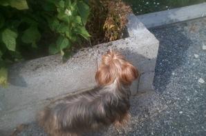 bonjour a tous je suis tristes car je vient de faire piqué ma petite chienne edja
